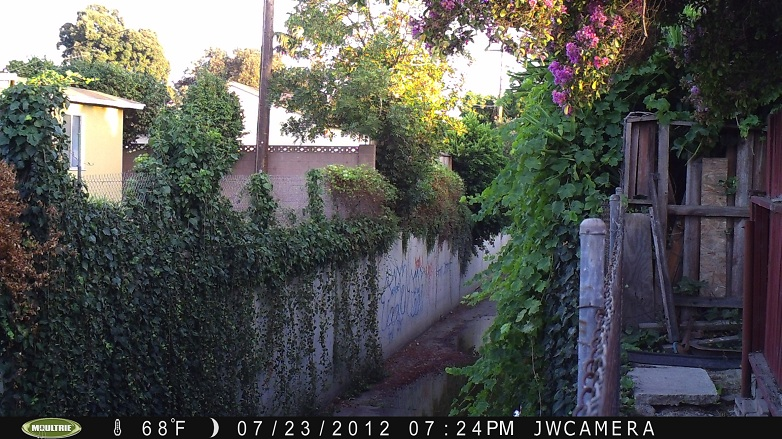first photo taken by the game camera - Lakewood, California