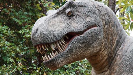 Tyrannosaurus Rex kind of dinosaur