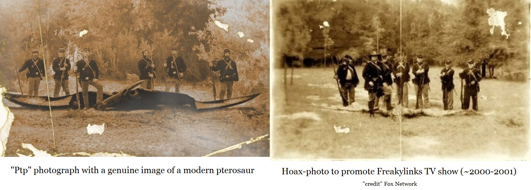 genuine image of a modern pterosaur in on the left; hoax-photo is on the right